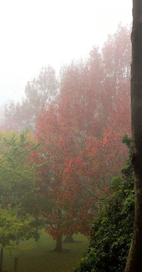 Alberi di autunno con nebbia fotografia stock libera da diritti