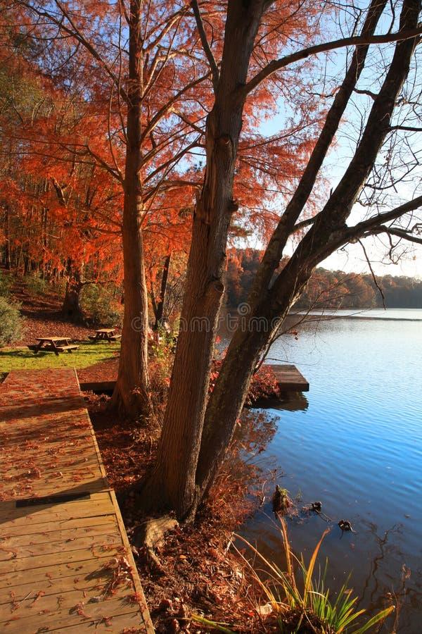 Alberi di autunno dal lago immagine stock libera da diritti