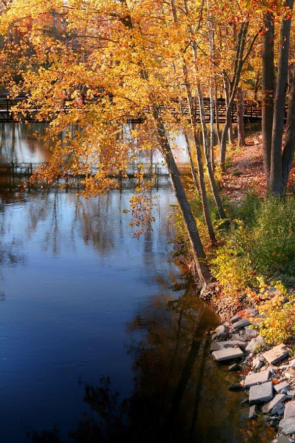 Alberi di autunno dal lago immagini stock