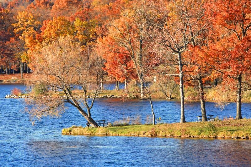 Alberi di autunno dal lago fotografia stock