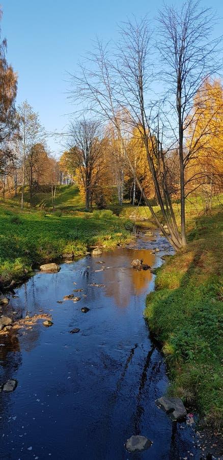 Alberi di autunno e dell'insenatura fotografia stock libera da diritti