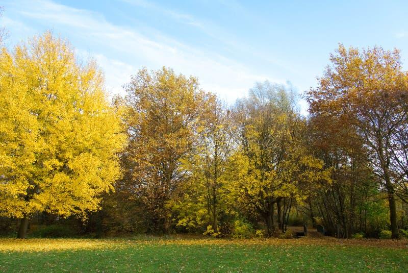 Alberi di autunno nel fondo del parco fotografia stock libera da diritti
