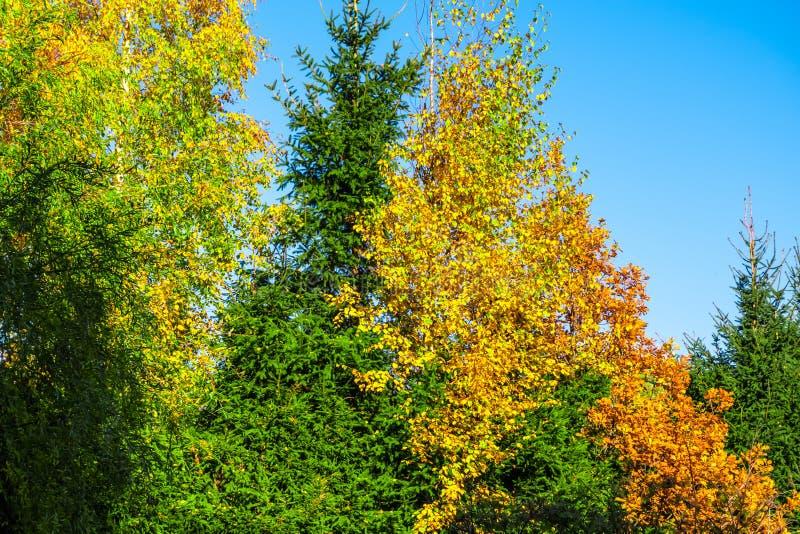 Alberi di autunno nel parco fotografie stock libere da diritti