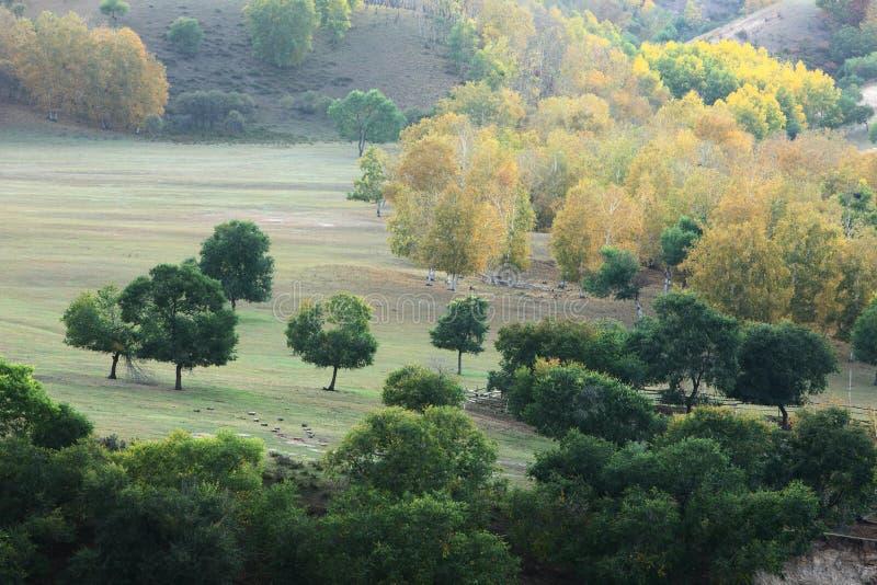 Alberi di autunno in pascolo fotografie stock