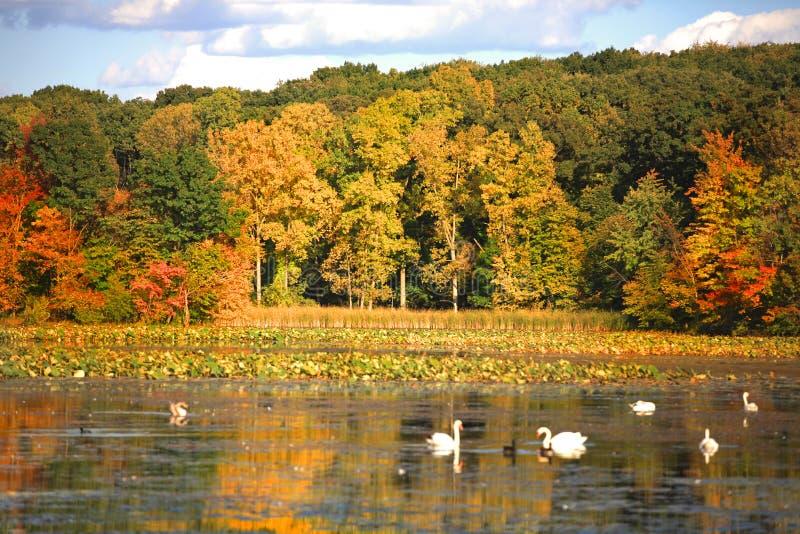 Alberi di autunno nella penombra immagini stock libere da diritti