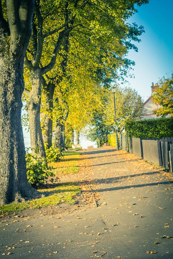 Alberi di autunno nella via fotografie stock libere da diritti
