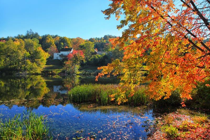 alberi di autunno sopra il lago immagini stock libere da diritti