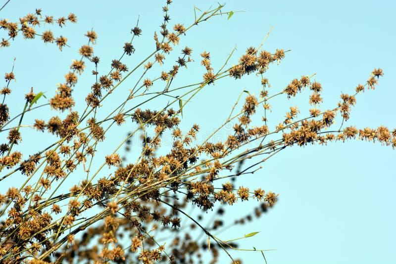 Alberi di bambù verdi in foresta fotografia stock libera da diritti