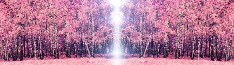 Alberi di betulla rosa nel parco immagini stock libere da diritti