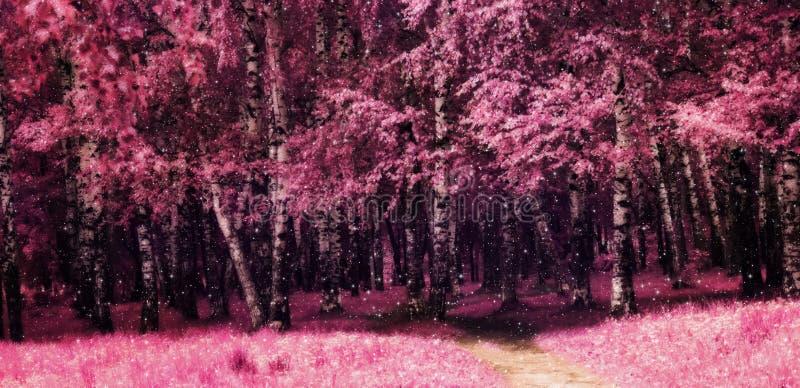 Alberi di betulla rosa nel parco fotografie stock libere da diritti