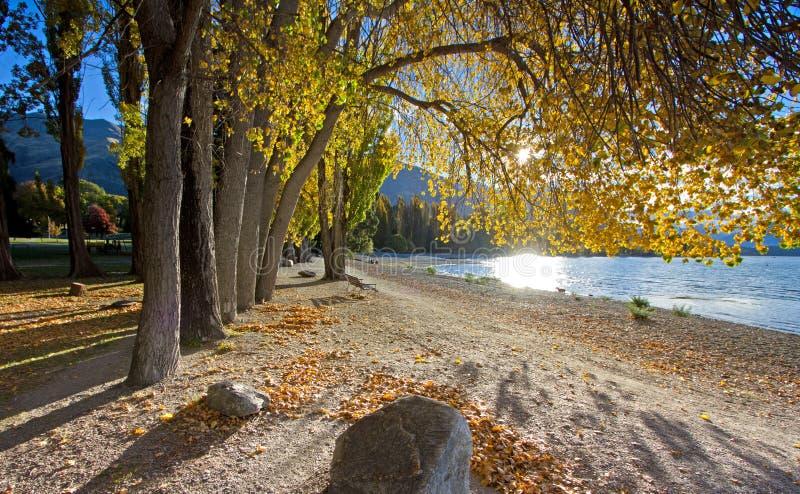 Alberi di caduta al lato del lago immagini stock