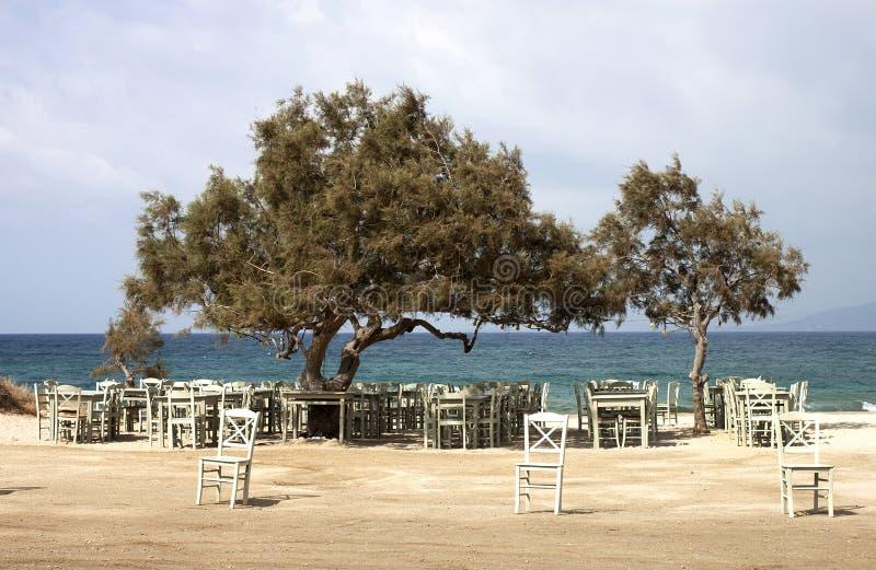 Alberi di cedro Mediterranei immagine stock