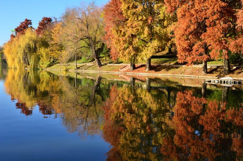 Alberi di cipresso calvo riflessi in acqua del lago Autumn Colors fotografia stock