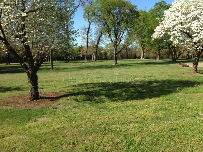 Alberi di corniolo del Missouri in una matrice dei fiori immagine stock libera da diritti