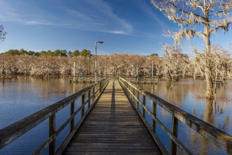 Alberi di Cypress al parco di stato del lago Caddo, il Texas orientale vicino alla Luisiana Spagnolo, palude fotografie stock libere da diritti
