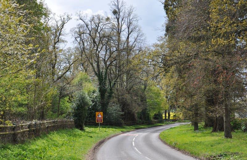 Alberi di estate e strada campestre nella campagna britannica immagine stock