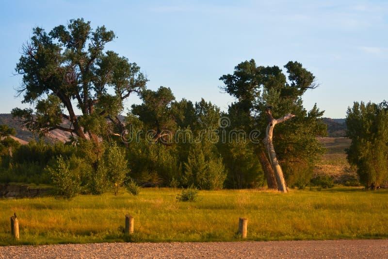 Alberi di estate lungo il fiume di Yampa, parco della casetta dei cervi in Colorado fotografia stock libera da diritti