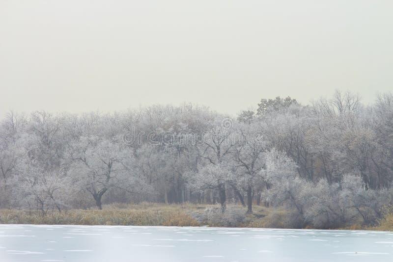 alberi di hoarfrost e un lago congelato in una giornata invernale fotografia stock