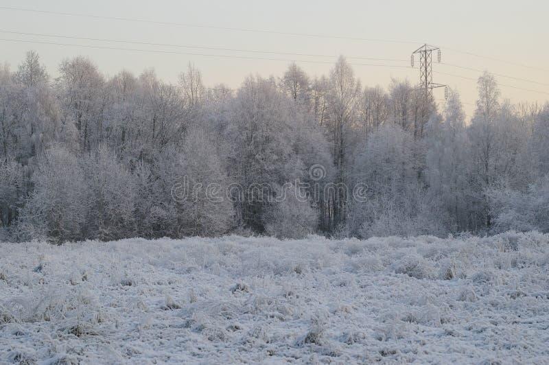 Download Alberi di inverno fotografia stock. Immagine di gelo, esterno - 3891110