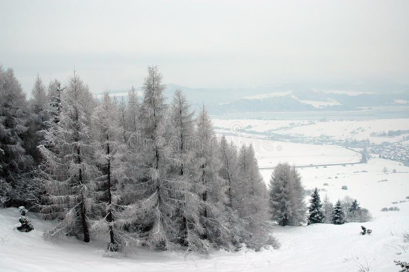 Download Alberi di inverno fotografia stock. Immagine di gennaio - 450630