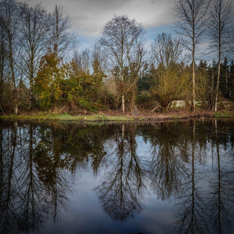 Alberi di inverno che riflettono un lago piano calmo in Redmond Washington fotografia stock