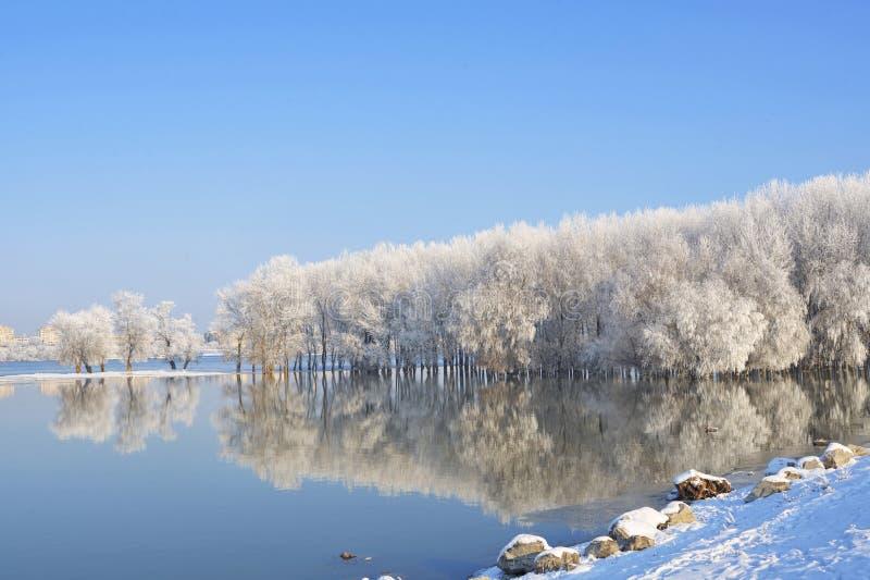 Alberi di inverno coperti di gelo su Danubio immagine stock