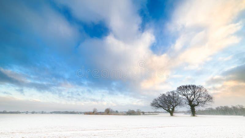 Alberi di inverno e cieli blu nuvolosi fotografia stock libera da diritti