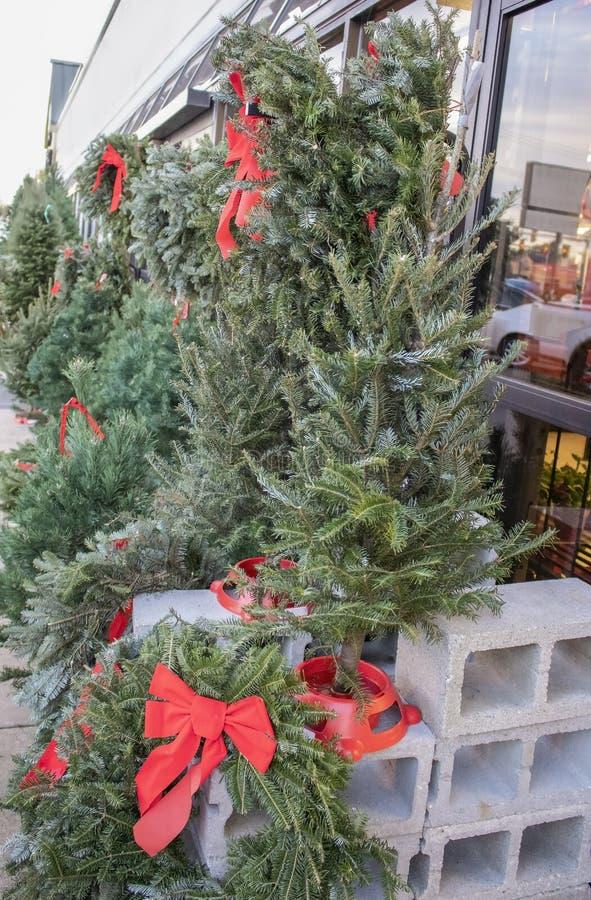Alberi di Live Christmas e corone e ghirlande con gli archi rossi da vendere fuori di un deposito con la via e le automobili rifl fotografia stock libera da diritti