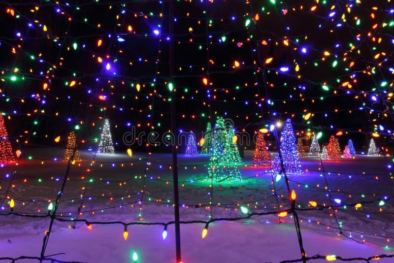 Alberi di Natale alle luci fotografia stock