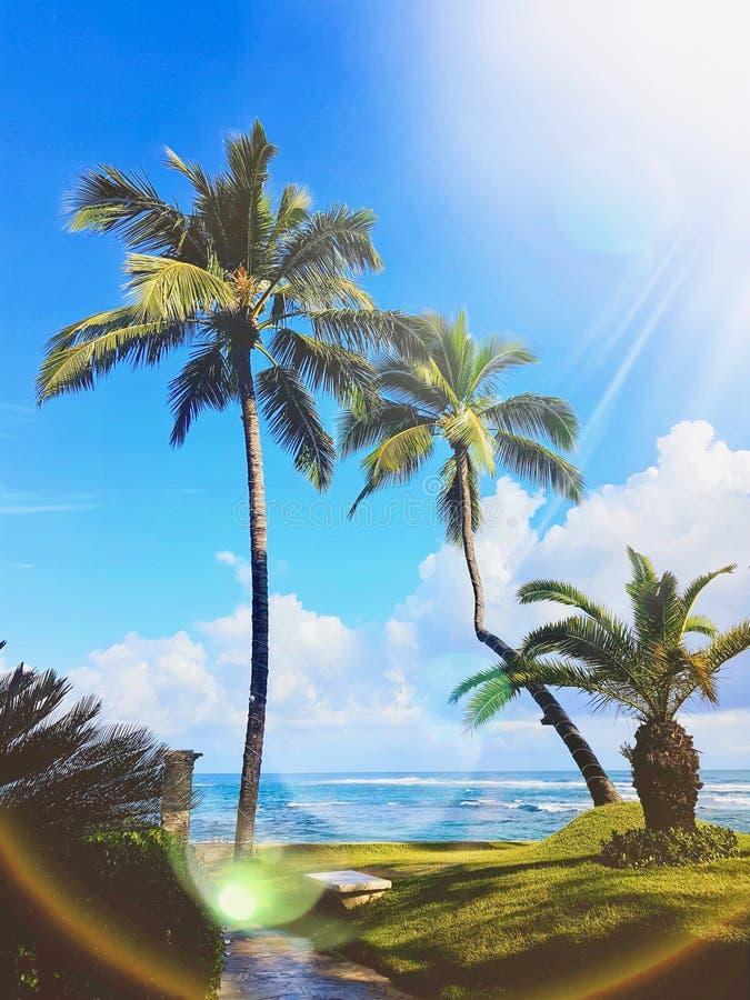 Alberi di noce di cocco dalla spiaggia fotografie stock libere da diritti