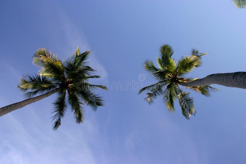 Download Alberi di noce di cocco fotografia stock. Immagine di tronchi - 213510