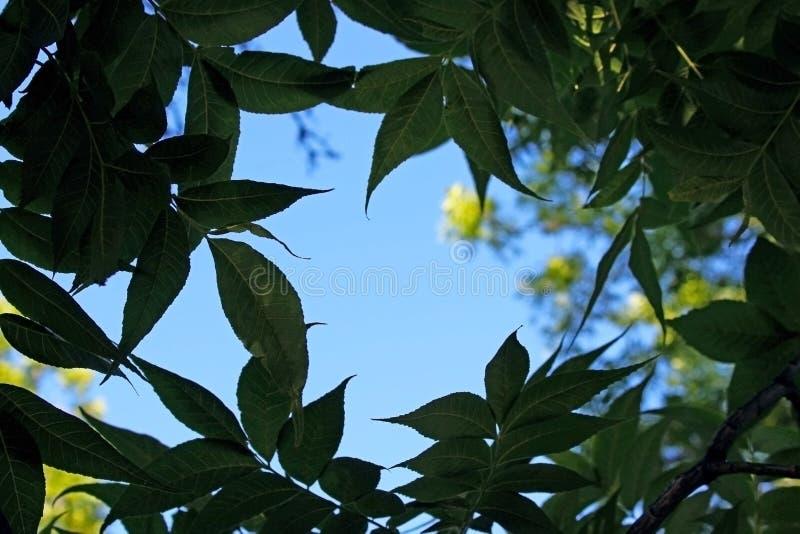 Alberi di pioppo della guardia notturna Campground, Zion fotografie stock libere da diritti
