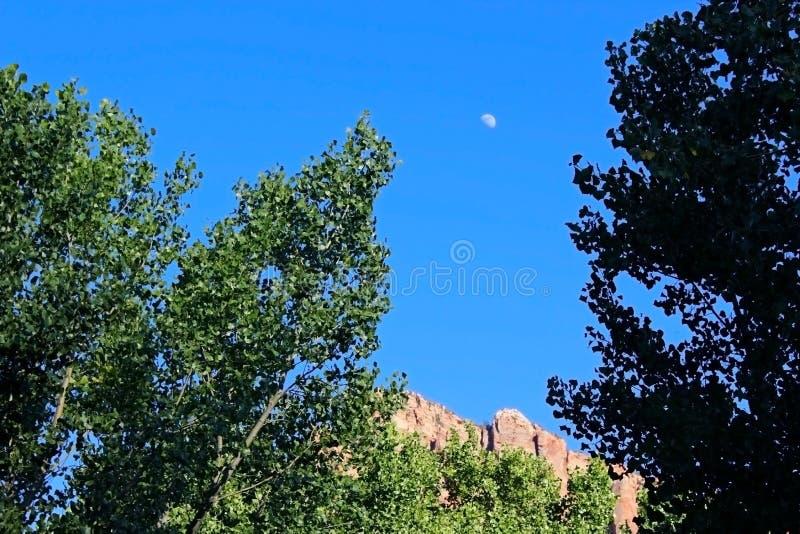 Alberi di pioppo della guardia notturna Campground, Zion fotografia stock libera da diritti