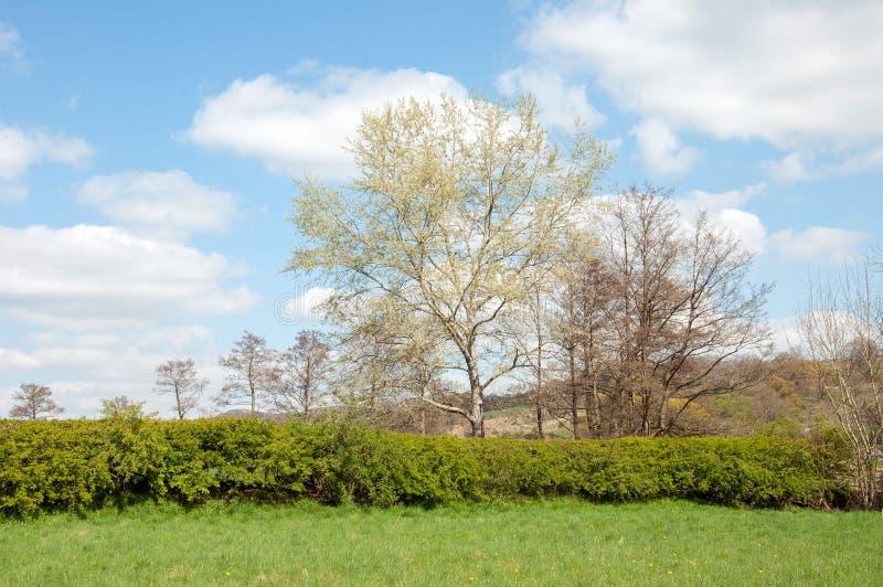 Alberi di primavera nella campagna inglese fotografia stock