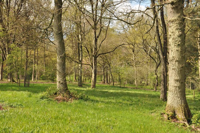 Alberi di primavera nella campagna inglese immagine stock libera da diritti