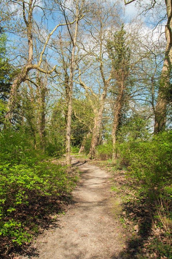 Alberi di primavera nella campagna inglese fotografia stock libera da diritti