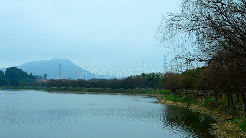 Alberi di salice dal lago fotografie stock