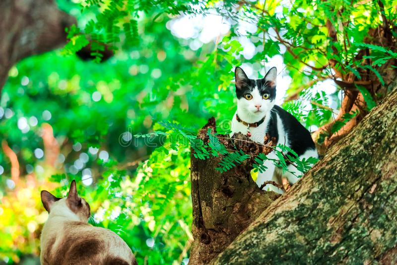 alberi di salita del gatto per prendere gli scoiattoli Ma non può scendere fotografia stock