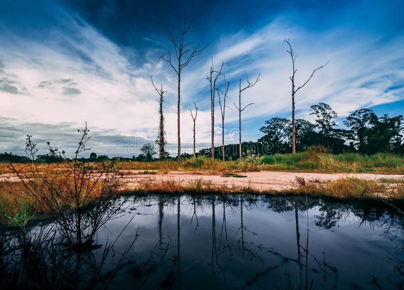 Alberi di scheletro con la riflessione dell'acqua in un campo immagini stock libere da diritti