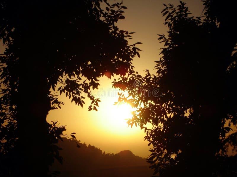 Alberi di tramonto immagini stock