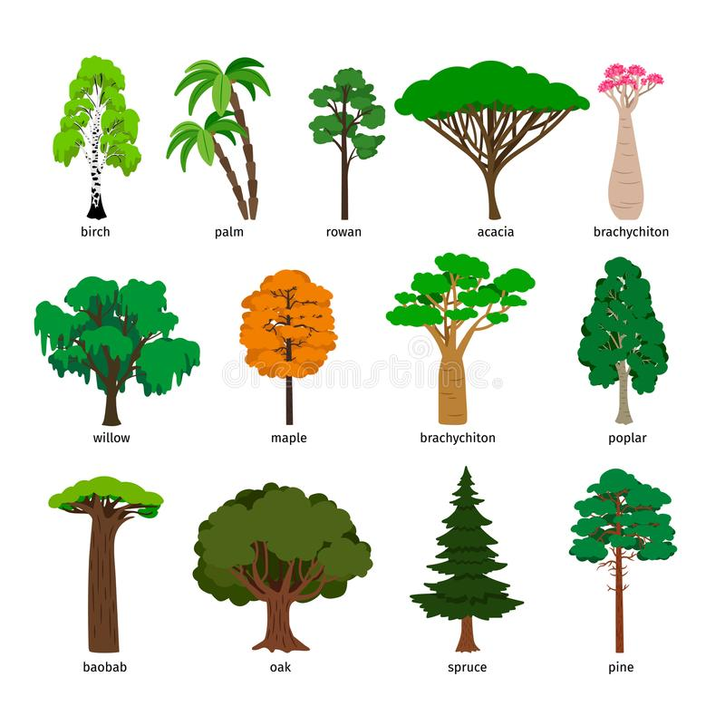 Alberi di vettore L'albero forestale ha messo con i titoli, betulla e quercia, pino e baobab, acacia e vettore attillato illustrazione di stock