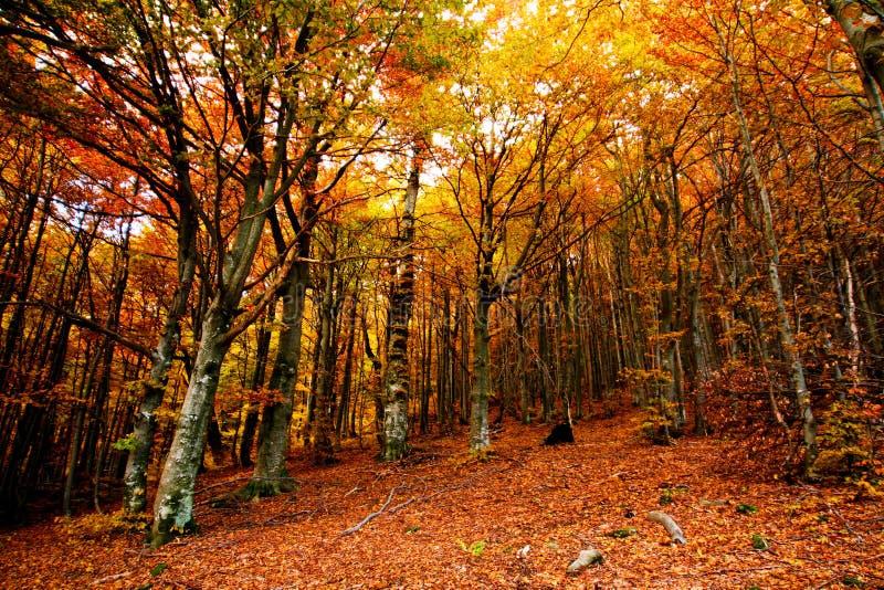 alberi dorati fotografia stock