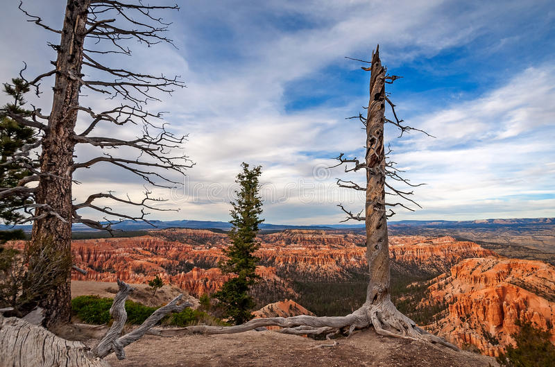 Alberi dormienti a Bryce Canyon immagine stock