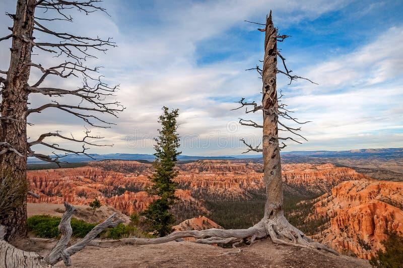 Alberi dormienti a Bryce Canyon fotografie stock libere da diritti
