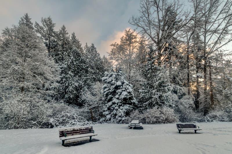 Alberi e banchi di Snowy immagine stock libera da diritti