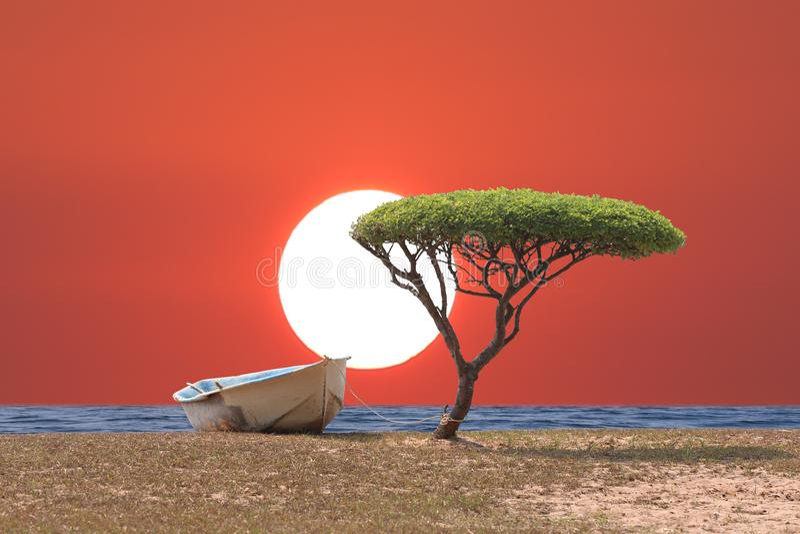 Alberi e barca tropicali della spiaggia nel cielo di sera con sunse immagine stock