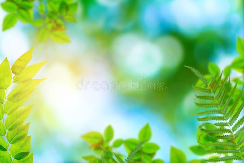 Alberi e bokeh verdi della pianta della foglia immagini stock