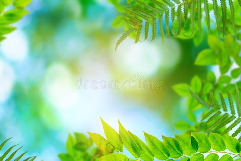 Alberi e bokeh verdi della pianta della foglia fotografia stock libera da diritti