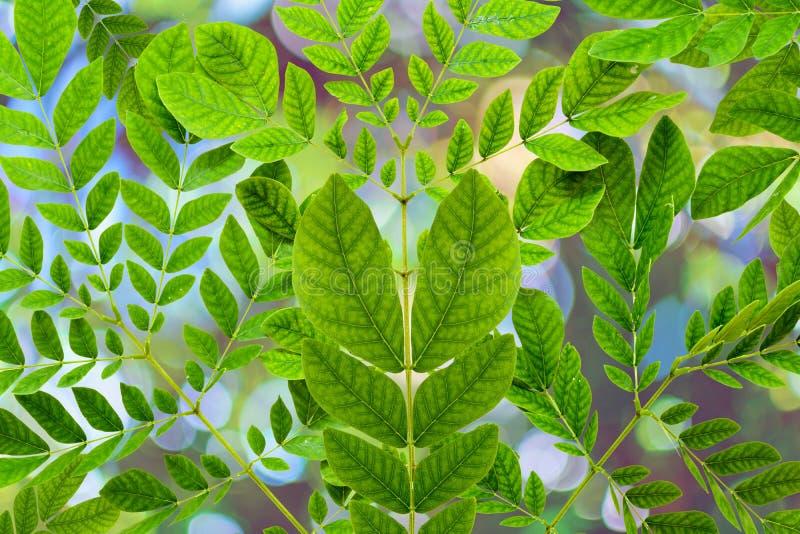 Alberi e bokeh verdi della pianta della foglia fotografie stock