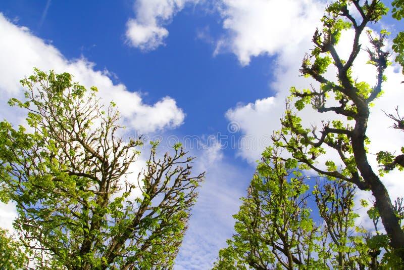Alberi e cielo fotografia stock libera da diritti